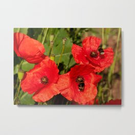 Poppies with guests Metal Print