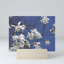 Star filled sky (Star Magnolia flowers!)      Edit Mini Art Print