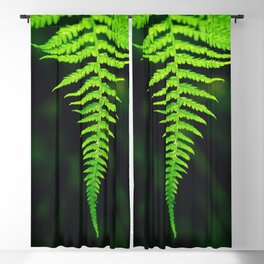 closeup shot leaves branch growing perfectly aligned manner Blackout Curtain