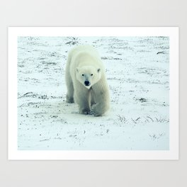 Chilly. Art Print