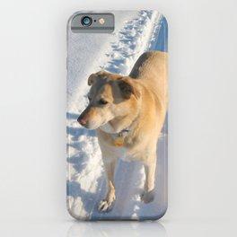 Waiting Dog | Lab Husky iPhone Case