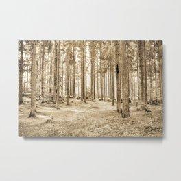 Tree Trunks III Metal Print