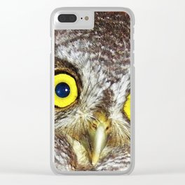 Baby screech owl Clear iPhone Case