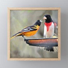 Food Fight: Oriole and Grosbeak Framed Mini Art Print
