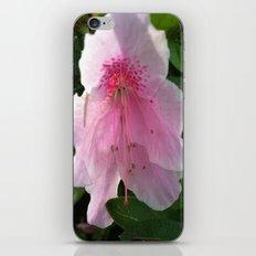 azelia iPhone & iPod Skin