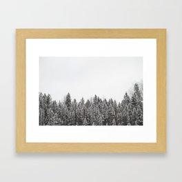 Algonquin Trees Framed Art Print