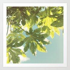 Fig Leaves Art Print