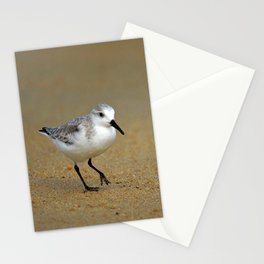Sanderling Stationery Cards