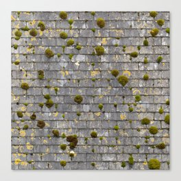 Mossy Roof Canvas Print