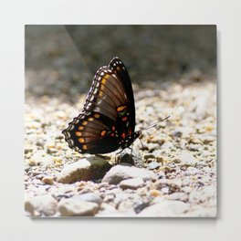 Watercolor Butterfly, White Admiral Butterfly 02, Cucumber Falls, Pennsylvania Metal Print
