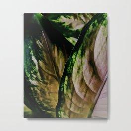 Lush Glow, Dieffenbachia Metal Print