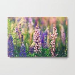 Lupine Flower - Lupinus - Floral Art Metal Print
