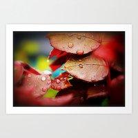 Water Droplets On Prize Rose Bush 5th Place Pixoto Images Art Print