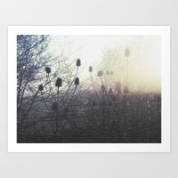 Thistling in the Rain Art Print