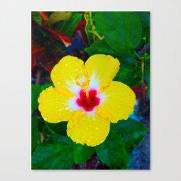 Rain Kissed Yellow Hibiscus Canvas Print