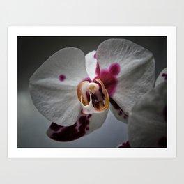 My growling dragon Orchid. Art Print