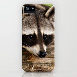 Adorable Raccoon Photo iPhone Case