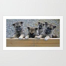 Norwegian Elkhound Puppies Art Print