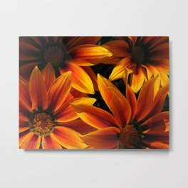 Gazania named Kiss Orange Flame Metal Print