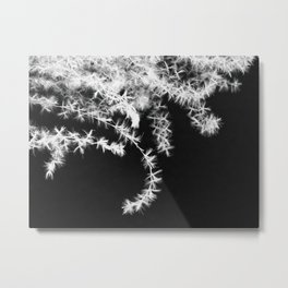 Stolen Beauty Metal Print