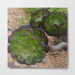 succulent depth Metal Print