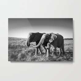 Elephant friends walk together along African savanna Metal Print