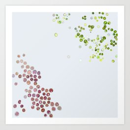 Red & green algae Art Print