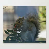 squirrel Canvas Prints featuring squirrel by Timeless Art On Canvas