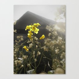 Summer Yield Canvas Print