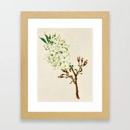 Gyoi-ko or Robe Yellow Cherry Blossoms Framed Art Print