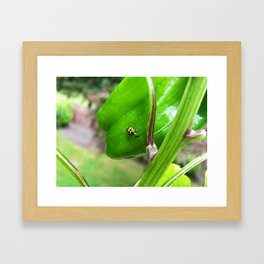 Yellow Lady Bug 0754 Framed Art Print