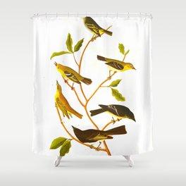 Little Tyrant Flycatcher, Small-headed Flycatcher, Blue Mountain Warbler, Bartram's Vireo, Short-leg Shower Curtain