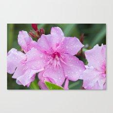 Pink Flora Canvas Print
