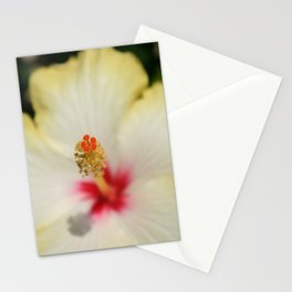 Close Up of Stamen And Pollen Yellow Hibiscus  Stationery Cards