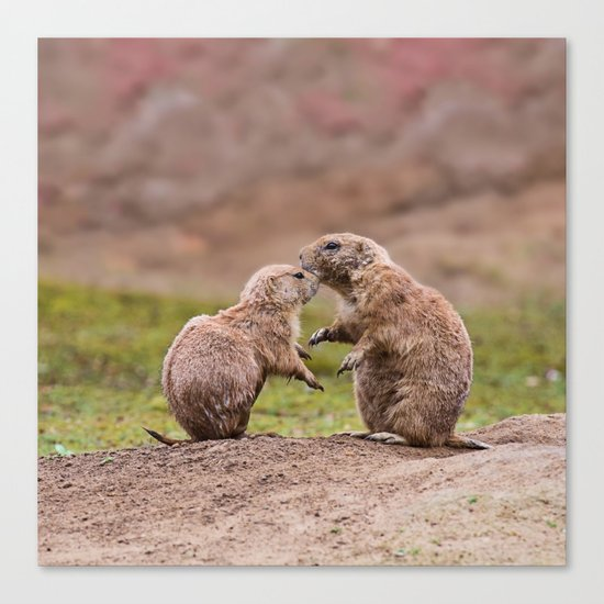 Cute little prairie dogs love Canvas Print