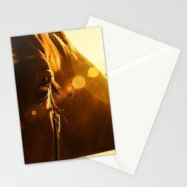 Evening Flare Horse - Animal Photography - Farm Animal - Pet Stationery Cards