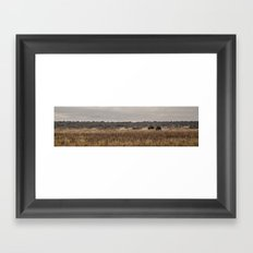 Bison Panorama Framed Art Print