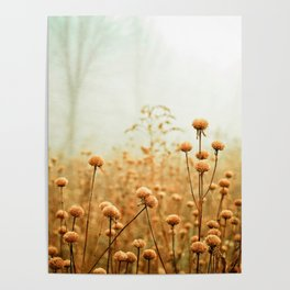Daybreak in the Meadow Poster