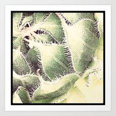 FLOWER 004 Art Print