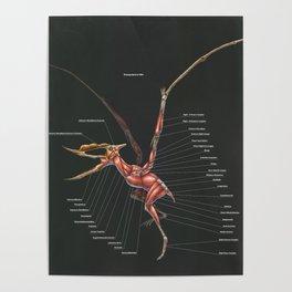 Dsungaripterus Weii Muscle Study Poster