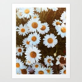 Pushing Daisies Art Print