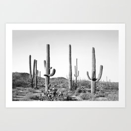 Grey Cactus Land Art Print