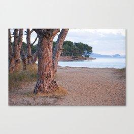 Salins Beach 8902  Canvas Print