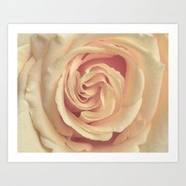pale yellow rose Art Print