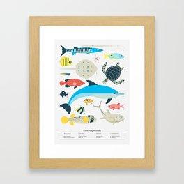 Coral reef animals Framed Art Print