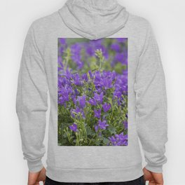 bellflower in bloom in the garden Hoody