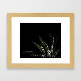 Haworthia Succulent plant cactus Framed Art Print