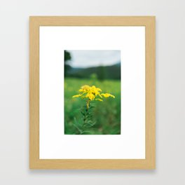 Misty Mountain Hop Framed Art Print