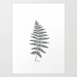 New Zealand Tree Fern Art Print