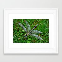 dragonfly Framed Art Prints featuring dragonfly by  Agostino Lo Coco